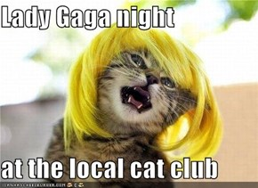 Lady Gaga night   at the local cat club