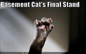 Basement Cat's Final Stand