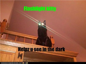 Flashlight kitty