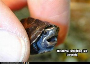 This turtle, is thinking EVIL thoughts