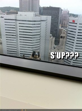 S'UP???