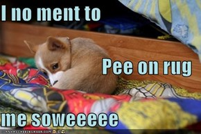 I no ment to Pee on rug  me soweeeee