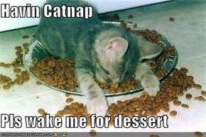 Havin Catnap  Pls wake me for dessert