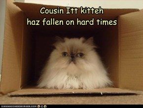 Cousin Itt kittehhaz fallen on hard times