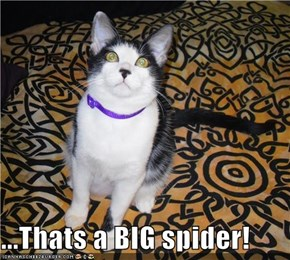 ...Thats a BIG spider!