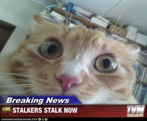 Breaking News - STALKERS STALK NOW