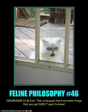 FELINE PHILOSOPHY #46