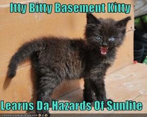 Itty Bitty Basement Kitty  Learns Da Hazards Of Sunlite