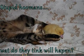 Stupid hoomans....  wat do they tink will hapen?