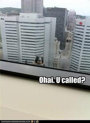 Ohai. U called?