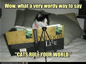 wise kitteh is wise