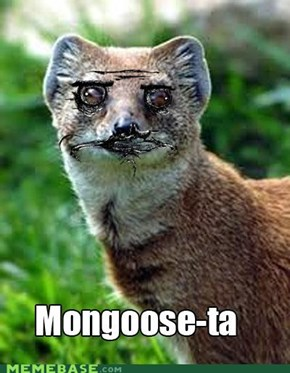 Mongoose-ta