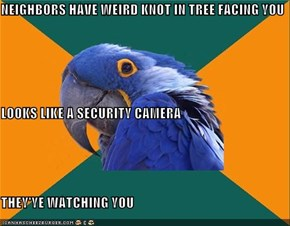 NEIGHBORS HAVE WEIRD KNOT IN TREE FACING YOU LOOKS LIKE A SECURITY CAMERA THEY'YE WATCHING YOU