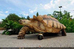 The Six Million Dollar Tortoise