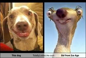 This dog Totally Looks Like Sid from Ice Age