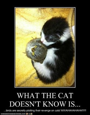 WHAT THE CAT DOESN'T KNOW IS...
