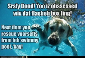 Oh look, a *splash* Brblblbblrbblbubblbrbbleblibbleblb...