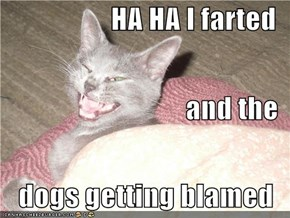 HA HA I farted and the dogs getting blamed