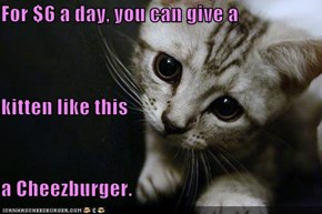 For $6 a day, you can give a kitten like this a Cheezburger.