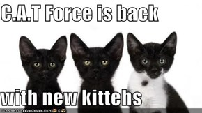 C.A.T Force is back   with new kittehs