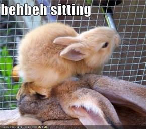 behbeh sitting