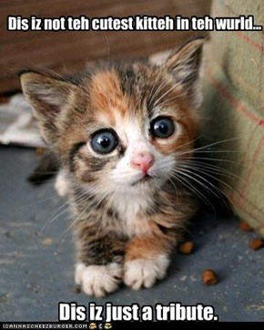 Dis iz not teh cutest kitteh in teh wurld...