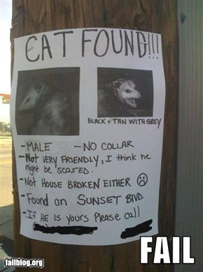 Cat Identification Fail
