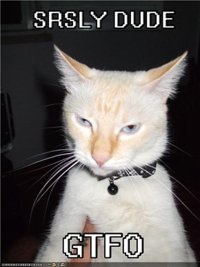 Funny cat is not amused