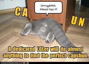 A  dedicated  LOLer  will  do  almost anything  to  find  the  perfect  capshun.