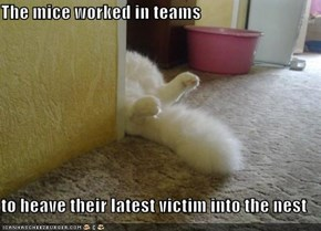 The mice worked in teams  to heave their latest victim into the nest