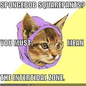 SPONGEBOB SQUAREPANTS? YOU MUST                         MEAN THE INTERTIDAL ZONE.