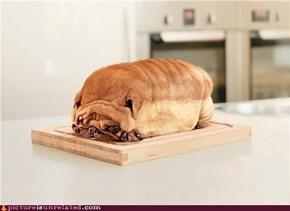 bread goggie??