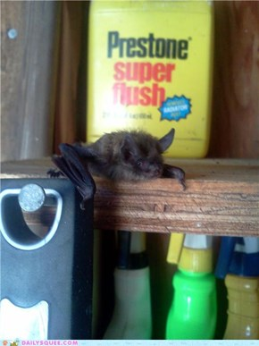 Itty Bitty Batty
