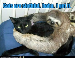Cats are slothful.  haha.  I get it.