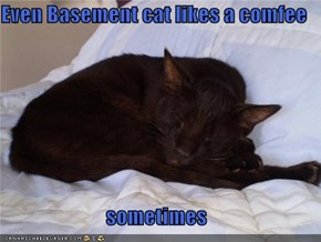 Even Basement cat likes a comfee  sometimes