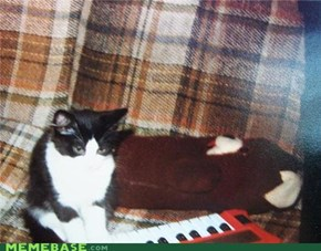 Original Keyboard Cat and Pedobear.