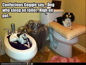 Confucious Goggie say....Dog who sleep on toilet , High on pot...