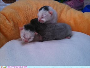 my 2 day old baby Kittehs