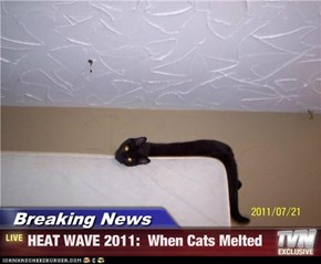 Breaking News - HEAT WAVE 2011:  When Cats Melted