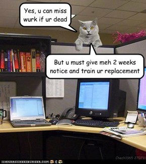 Kittteh Office Rulez
