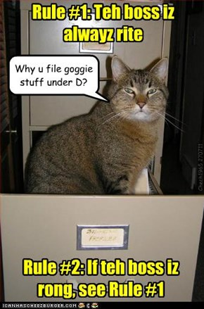 Kitteh Office Rulez