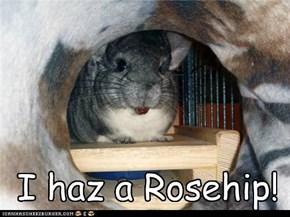 I haz a Rosehip!
