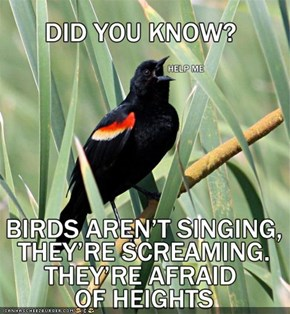 Facts About Nature #143: On Why Birds Sing
