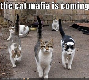 the cat mafia is coming