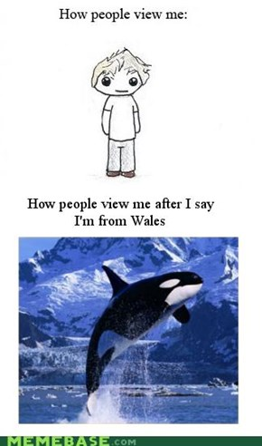 Wales Whales Wails