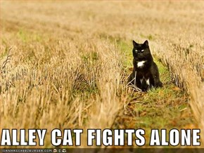 ALLEY CAT FIGHTS ALONE