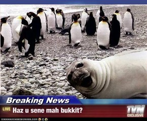 Breaking News - Haz u sene mah bukkit?