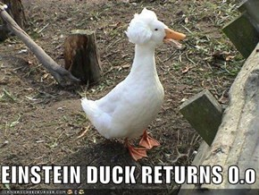 EINSTEIN DUCK RETURNS 0.o