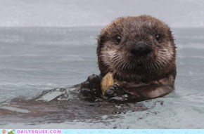 Putting the AWWWWWWWWWWW in Otter