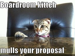 Boardroom kitteh  mulls your proposal